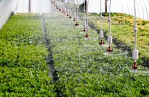 SpinNet-mikrosprinklere i væksthus i Jylland